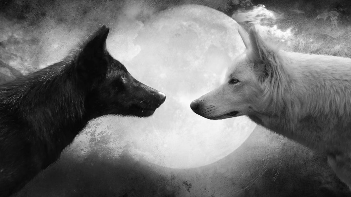 The Story of Two Wolves andTomorrowland