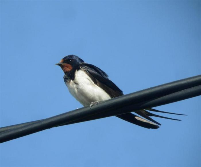 The Swallows arehere